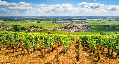 Wijngaarden in Bourgondië