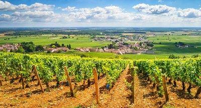 Wijngaarden in de Nivernais Loire-vallei