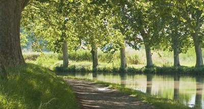 Tree-lined section of the Canal du Midi