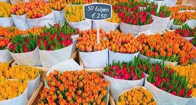 Tulpen op de markt, Nederland