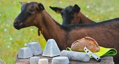 Geiten en kaas