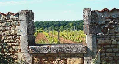 Wijngaarden en oude huizen in de Charente