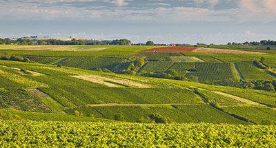 Wijngaarden bij Sancerre