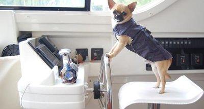 Onze aanbevelingen voor een vaarvakantie met uw hond