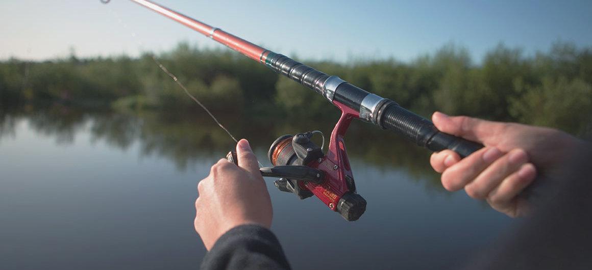 Viseen in de  rivier Shannon