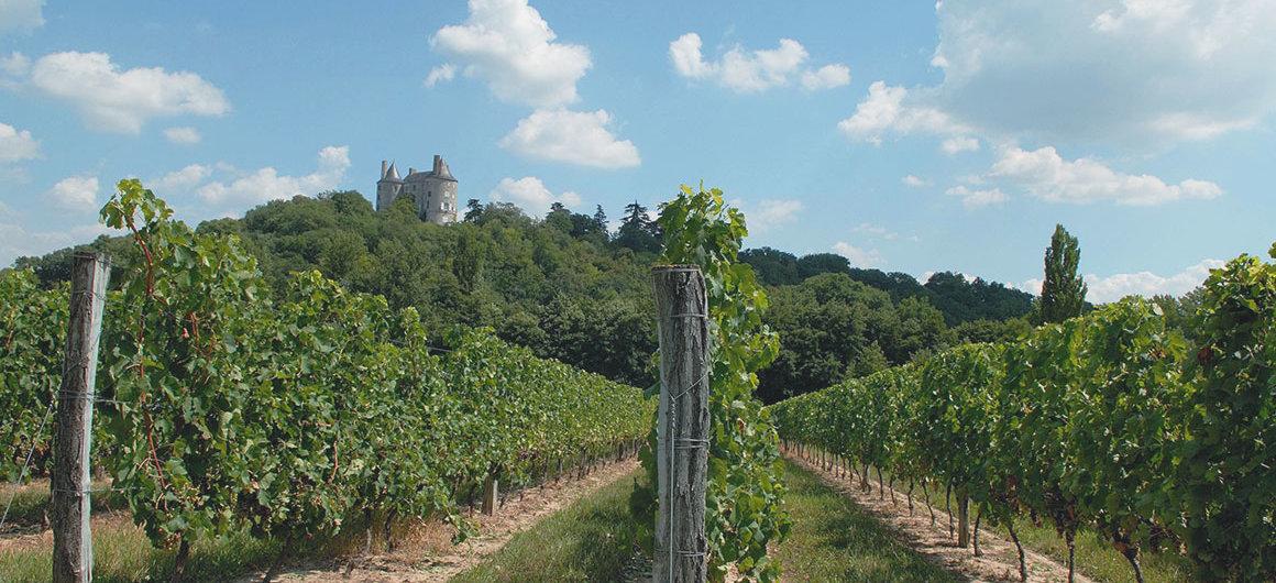 Wijngaarden van Buzet, Aquitanië