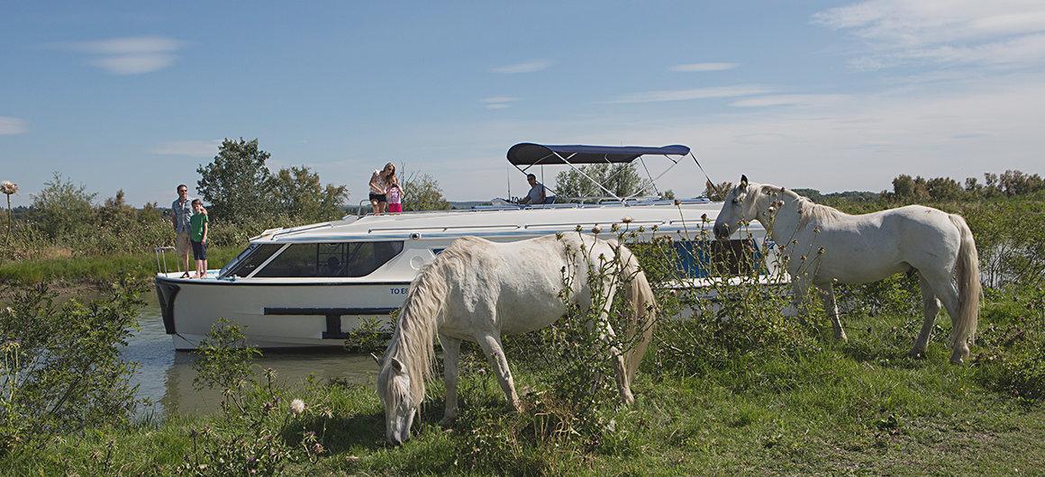 Vision en wilde paarden