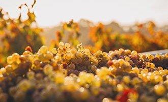 Mandje met druiven